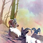 Sheep Shape Poster