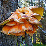 Shelf Fungus In Carl E. Wynn Nature Center In Homer-ak   Poster