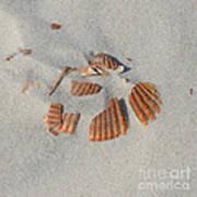Shell Jigsaw Poster