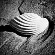 Shell On Sand Black And White Photo Poster