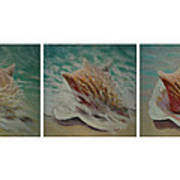 Shells Triptych Poster by Don Young
