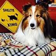 Sheltie Crossing Poster