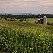 Shenandoah Corn Poster
