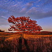 Shenandoah Tree Poster