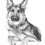 Shepherd Dog Pencil Portrait Poster