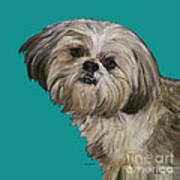Shih Tzu On Turquoise Poster by Dale Moses