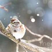 Shiny Tree Sparrow Poster