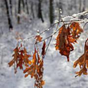 Shivering Oak Leaves Poster