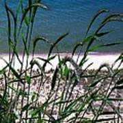 Shore Grass View Poster