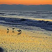 Shorebirds At Dawn Poster