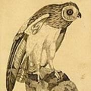 Short-eared Owl Poster