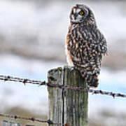 Short Eared Owl Poster