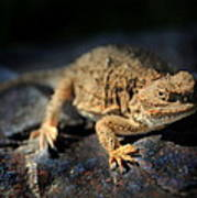 Short Horned Lizard Poster
