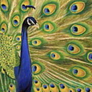 Showoff - Peacock Painting Poster by Prashant Shah