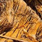 Shredded Bark Poster
