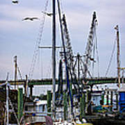 Shrimp Boats At Lazaretto Creek Poster
