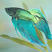 Siamese Fighting Fish Poster by IM Spadecaller