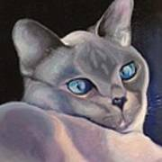 Siamese In Blue Poster