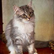 Siberian Forest Kitten II Poster