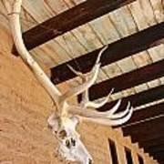 Side Skull  Poster