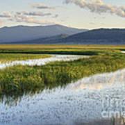 Sierra Valley Wetlands Poster