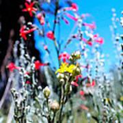 Sierra Wild Flowers II Poster