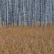 Silent Sentinels Of Autumn Grasses Poster