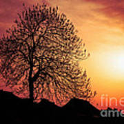 Silhouette Of Tree Poster