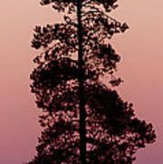 Silhouette Tree At Sunrise Poster
