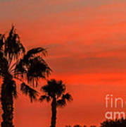 Silhouetted Palm Trees Poster