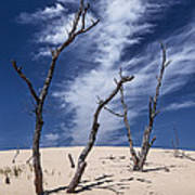 Silver Lake Dune With Dead Trees And Cirrus Clouds Poster