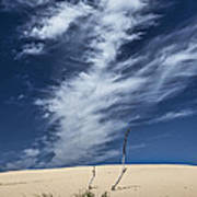 Silver Lake Dune With Grass Dead Trees And Cirrus Clouds Poster