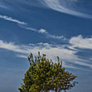 Silver Lake Dune With Tree Grove And Cirrus Clouds Poster