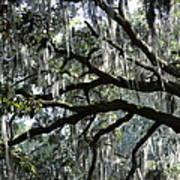 Silver Savannah Tree Poster