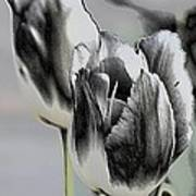 Silver Tulips Poster