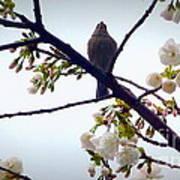 Singing Of Spring Poster