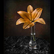 Single Asiatic Lily In Vase Poster