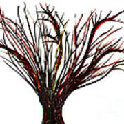 Single Bare Tree Isolated Poster