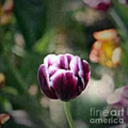 Single Bloom Poster