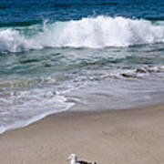 Single Seagull On The Beach Poster
