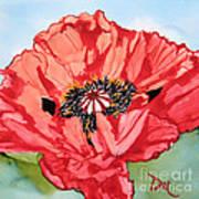 Single Oriential Poppy Poster