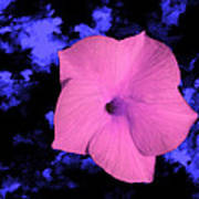 Single Pink Cactus Flower Poster