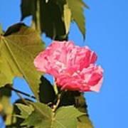 Single Pink Flower Poster