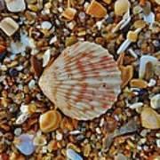 Single Shell Hatteras Island 17 9/3 Poster