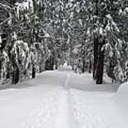 Single Track Cross Country Skiing Trail Yosemite National Park Poster