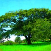 Single Tree In Spring Poster