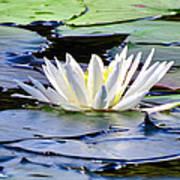 Single White Lotus Poster