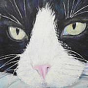 Sissi The Cat 2 Poster