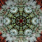 Sister Cactus Mandala Poster