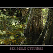 Six Mile Cypress Fort Myers Florida Poster